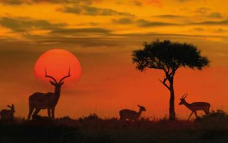 Pearl King Travel - 16 Day Grand Escorted Safari Tour of South Africa