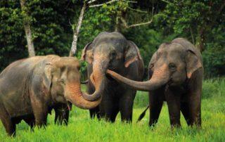Pearl King Travel -10-nights-krabi-and-elephant-hills-29-mar-18