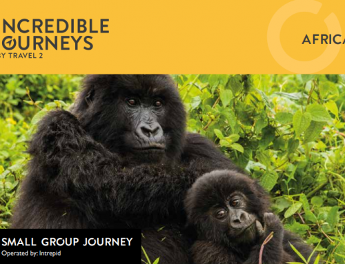 16 day Gorillas & Game Parks